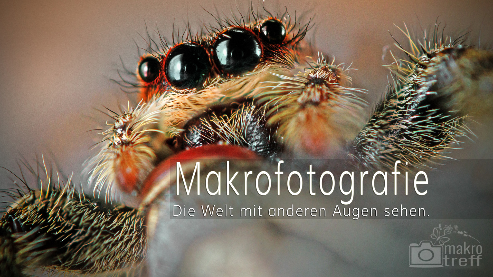 Makrofotografie Video