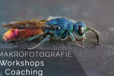 Makrofotografie-Coaching und Workshops